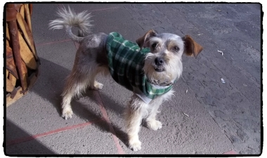 Guts goes metrosexual.
