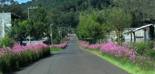 floresonroad